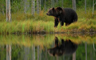 Brown Bear Wall Art - Photograph - Bear And Fish *** by Assaf Gavra