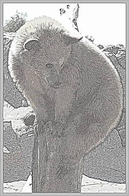 Photograph - Bear Balance II by Kathy Sampson