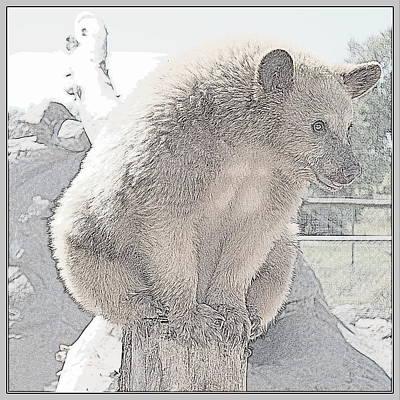 Photograph - Bear Balance IIl by Kathy Sampson