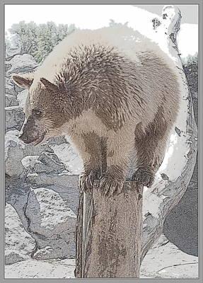 Photograph - Bear Balance by Kathy Sampson