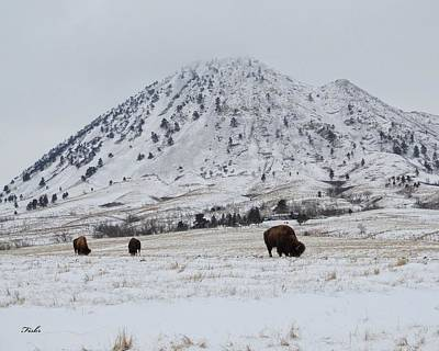 Bear Butte Buffalo Art Print by Fiskr Larsen