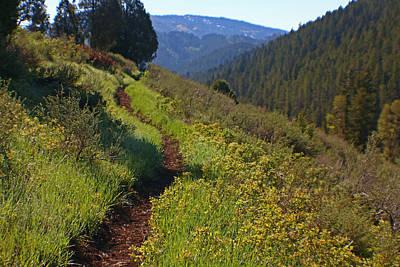 Photograph - Bear Creek Trail by Jon Emery