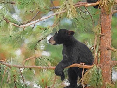 Digital Art - Bear Cub In Tree 2 by Ernie Echols