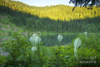Photograph - Bear Grass by Idaho Scenic Images Linda Lantzy