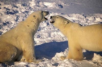Photograph - Bear Greetings by Randy Green