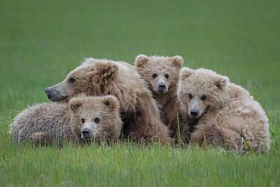 Bear Huddle Art Print