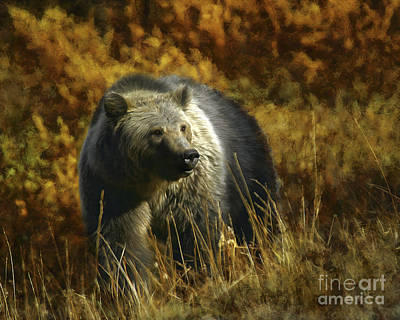 Bear - Hyperphagia Art Print by Wildlife Fine Art