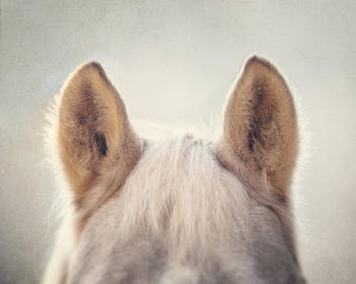 Palomino Horse Photograph - Bear by Lisa Russo