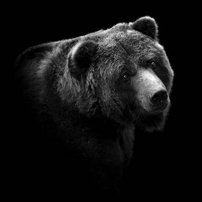 Portrait Of Bear In Black And White Print by Lukas Holas