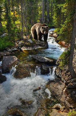 Teton Photograph - Bear Necessity by Ken Smith