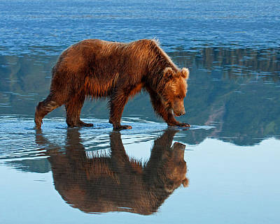Photograph - Bear Of A Reflection 8x10 by Shari Sommerfeld