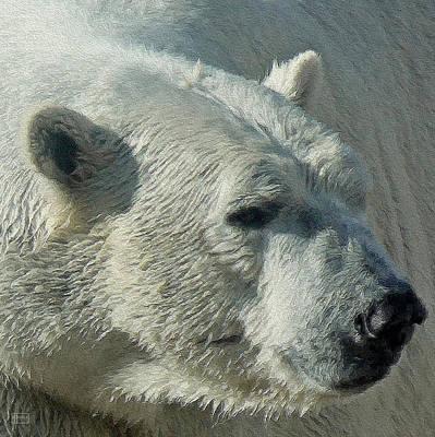 Digital Art - Bear Polar by Jim Pavelle