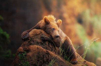 Grizzlies Wall Art - Photograph - Bear Portrait by Sergio Saavedra Ruiz