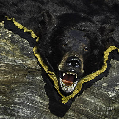 Photograph - Bear Skin by Phil Cardamone