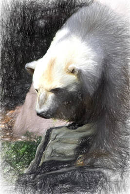 Digital Art - Bear Visions by Terry Cork