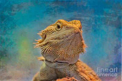 Photograph - Bearded Dragon by Bianca Nadeau