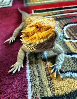 Photograph - Bearded Dragon by Patricia Januszkiewicz