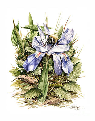 Painting - Bearded Dwarf Iris by Bob  George