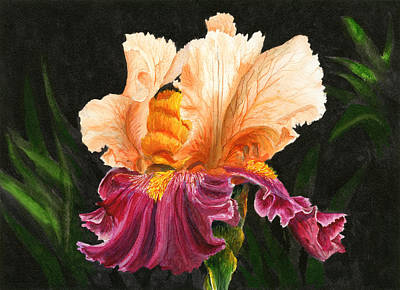 Bearded Iris Painting - Bearded Iris by Karen Wright