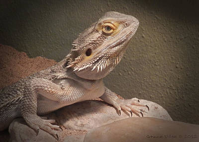 Photograph - Beardie by Grace Dillon