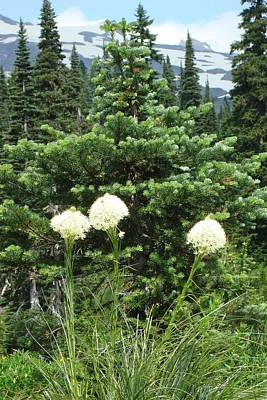 Photograph - Beargrass by Susan Woodward
