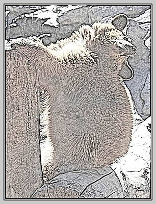 Photograph - Bearly Bashful II by Kathy Sampson