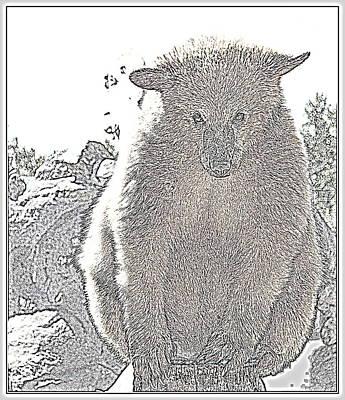 Photograph - Bearly Bashful by Kathy Sampson