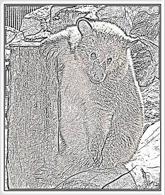 Photograph - Bearly Bashful IIl by Kathy Sampson