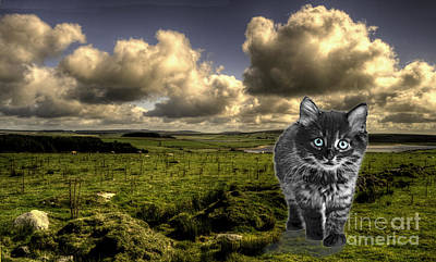 Of Cats Photograph - Beast Of Bodmin Moor  by Rob Hawkins