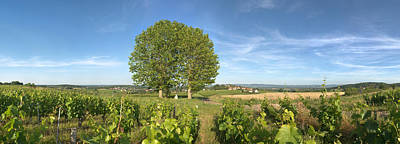 Winemaking Photograph - Beaujolais Vineyard, Montagny by Panoramic Images