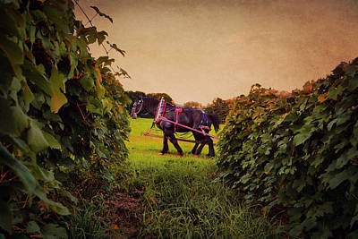 Photograph - Beauties Through The Grapevine by Emily Stauring