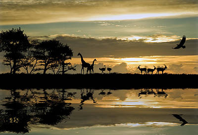 Ostrich Photograph - Beautiful African Themed Silhouette With Stunning Sunset Sky by Matthew Gibson