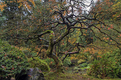 Oregon Photograph - Beautiful And Bare Japanese Lace-leaf Maple Tree by David Gn