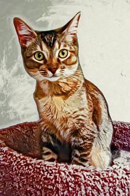 Kitten Digital Art - Beautiful Anya by David G Paul