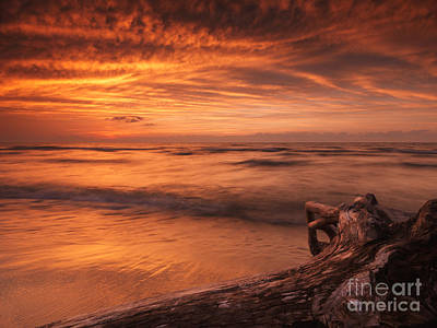 Pinery Photograph - Beautiful Atmospheric Sunset Scenery Of Driftwood On Lake Shore by Oleksiy Maksymenko