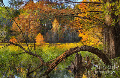 Photograph - Beautiful Autumn by Cheryl Davis