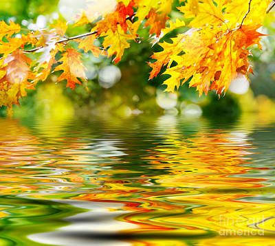 Beautiful Autumn Leaves Art Print