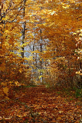 Photograph - Beautiful Autumn Sanctuary by Kay Novy