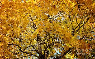 Beautiful Autumn Tree Art Print by Jolanta Meskauskiene