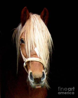 Art Print featuring the photograph Beautiful Bella by Wendy Coulson