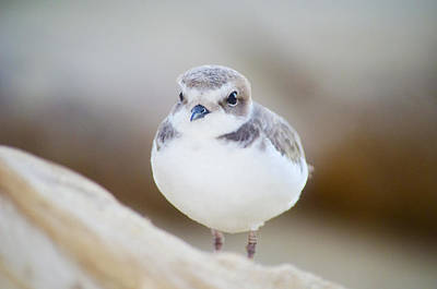 Photograph - Beautiful Bird by Spencer Hughes