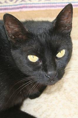 Beautiful Black Cat Portrait  Art Print by Tracey Harrington-Simpson