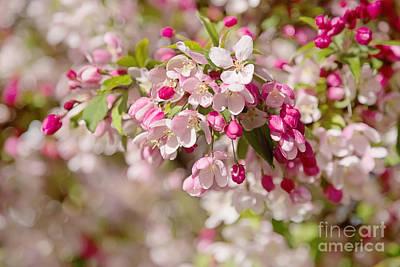 Beautiful Blossom Art Print by Natalie Kinnear