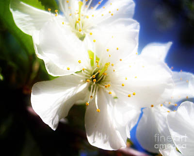 Photograph - Beautiful Blossom by Nina Ficur Feenan