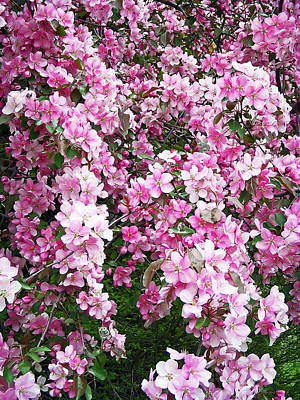 Tree Photograph - Beautiful Blossoms by Aimee L Maher Photography and Art Visit ALMGallerydotcom