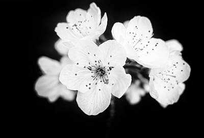 Beautiful Blossoms In Black And White Art Print