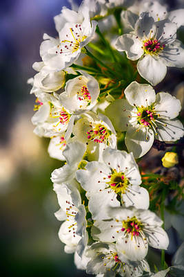 Photograph - Beautiful Blossoms by Sennie Pierson
