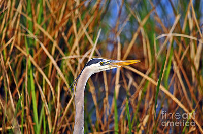 Gray Heron Photograph - Beautiful Blue by Al Powell Photography USA