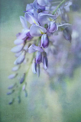 Photograph - Beautiful Blue by Annie Snel