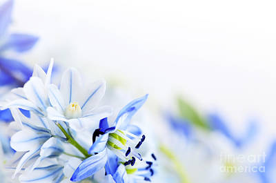 Beautiful  Blue Flower Art Print by Boon Mee